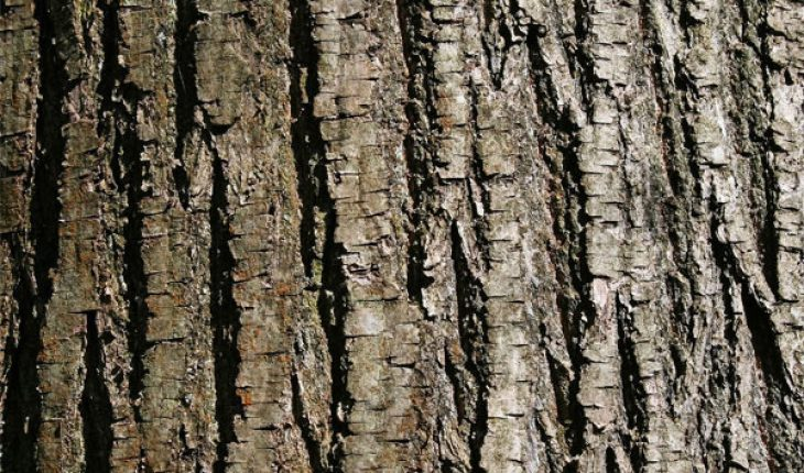 How to Repair Damaged Tree Bark - Mighty Guide