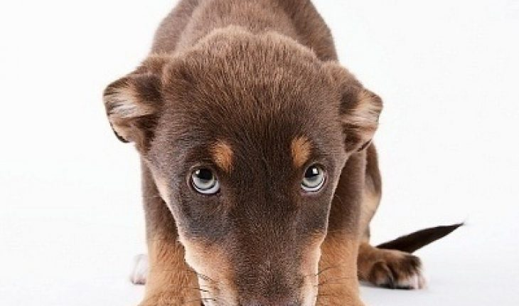 What To Do If Your Puppy Doesn T Drink Water